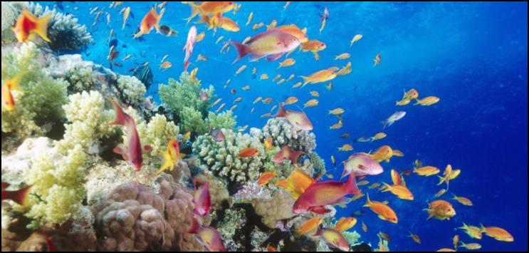 pez aguas tropicales calidas