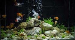consejos cuidar peces agua dulce